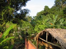 Bild: Cuyagua - Regenwald bis ans Meer