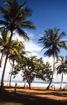 Bild: Rio Caribe - Regenwald und schoene Straende