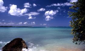 Bild: Tobago - Perle in der Karibik